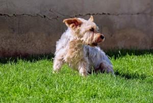 dog-1376870_1280